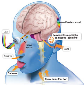 Resultado de imagem para estimulo cerebral