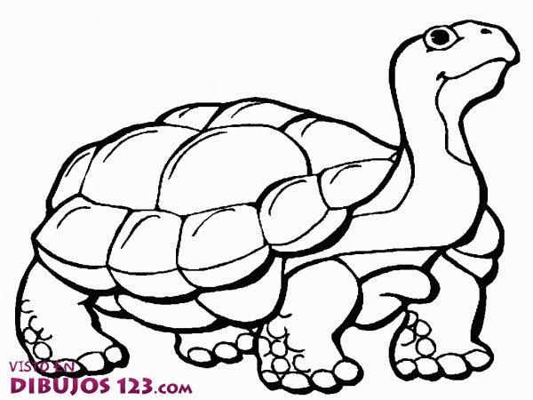 La Tortuga Para Colorear