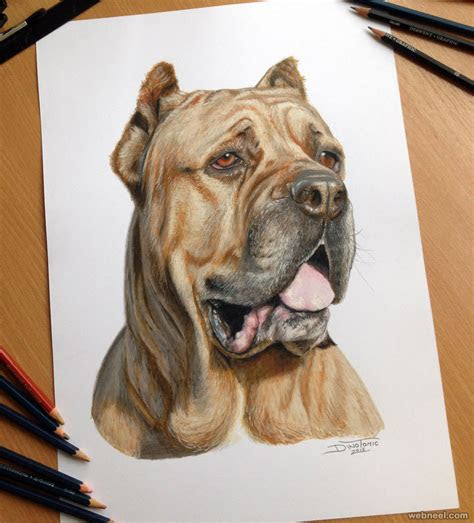 dog color pencil drawing  dinotomic