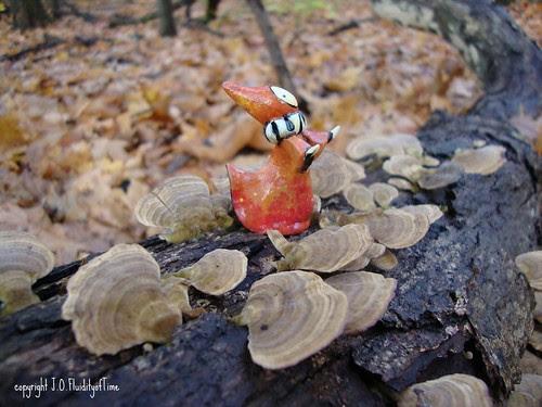 orange with lichens1