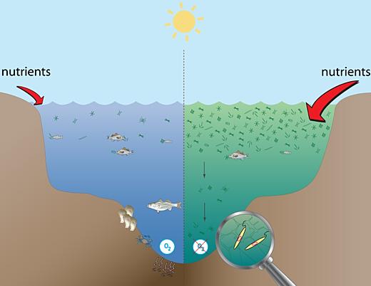 Ea O Ka Aina  Oceans Oxygen Crisis