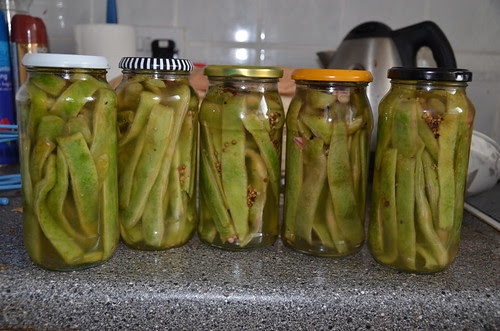 pickled runner beans Oct 13 2