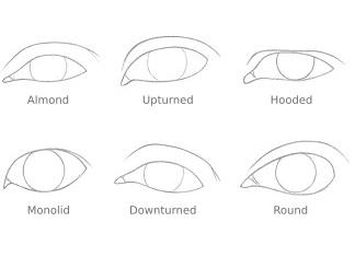 THUMBNAIL different eye shapes 324x235