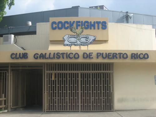 Cockfighting Arena - San Juan, Puerto Rico