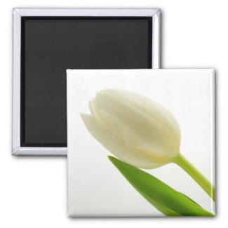 White Tulip magnet