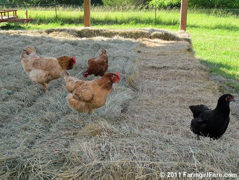 New Hay Inspectors - Farmgirl Fare