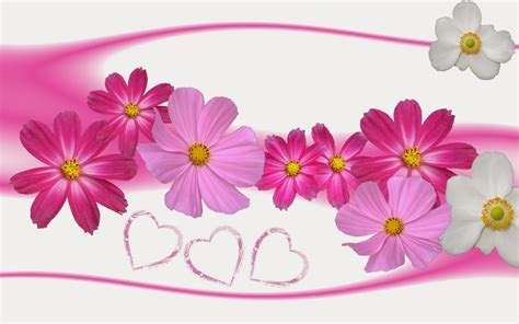 Lovely Flowers HD Wallpapers