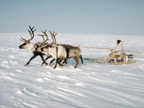 """Résultat de recherche d'images pour """"Les Inuits"""""""