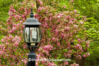 Blooming Crabapple and Lamp Post, Dane County, Wisconsin