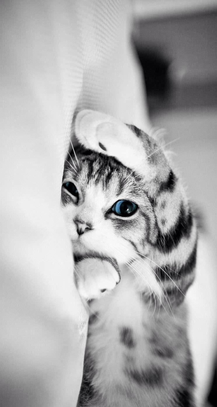 かわいい猫24 めちゃ人気 Iphone壁紙dj