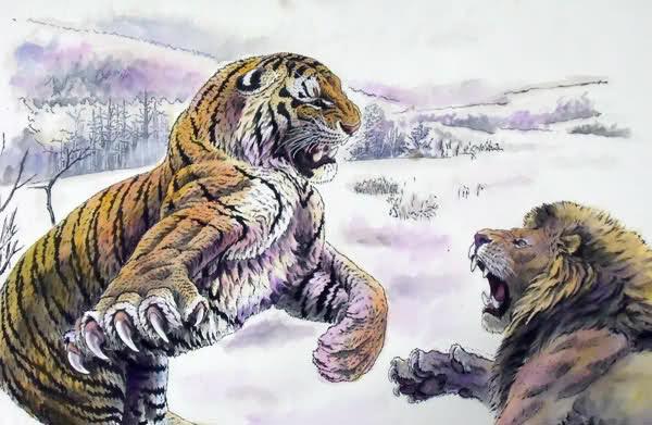 Duel Harimau vs Singa, Siapa yang Menang?