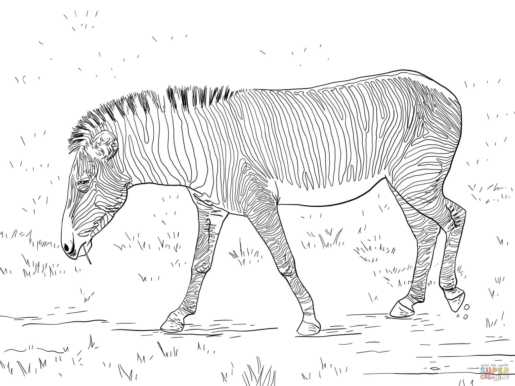10 kleurplaten voor volwassenen zebra krijg duizenden