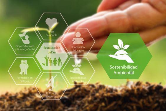 Consciencia y sostenibilidad ambiental, ¿cómo lograrlo?