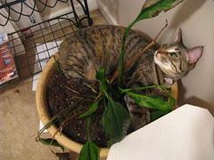 Maggie sleeping in the pot