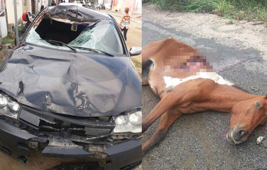 Cavalo invadiu a pista e por pouco não foi parar dentro do veículo   Foto: Arquivo Pessoal