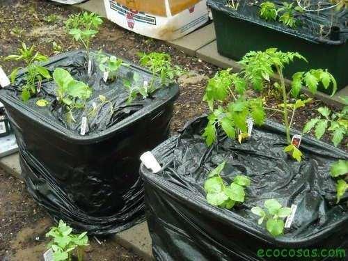 Add your vegatbles  Autorriego para macetas, fácil y gratis