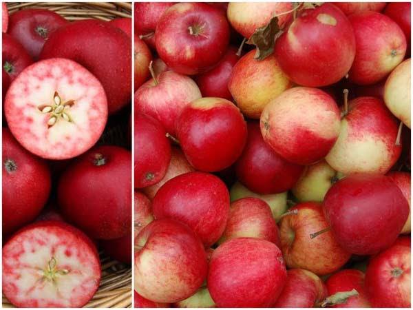perierga.gr - Σπάνια ποικιλία μήλων με κόκκινη σάρκα!