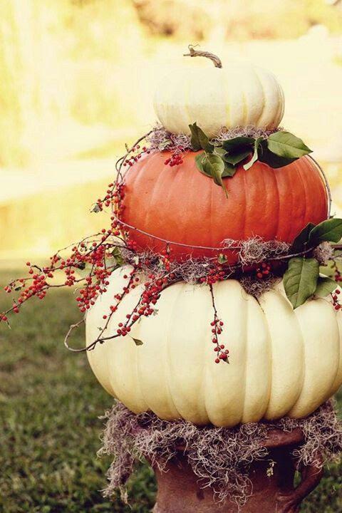 Love pumpkins