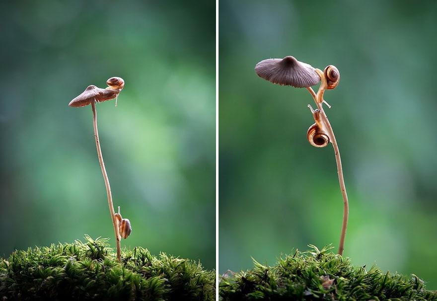 mushroom-photography-vyacheslav-mishchenko-3