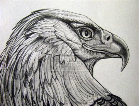 pencil drawings  eagles eagle pencil rendering