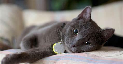 kamu cat lover inilah  perlengkapan kucing  wajib