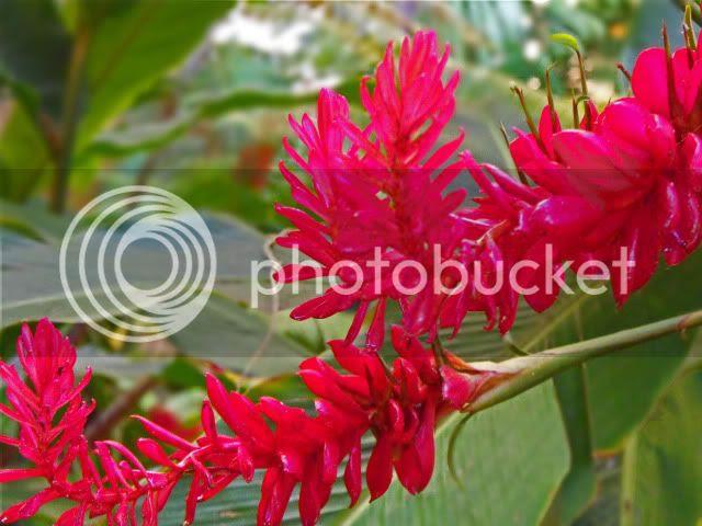 honeymoon-flower
