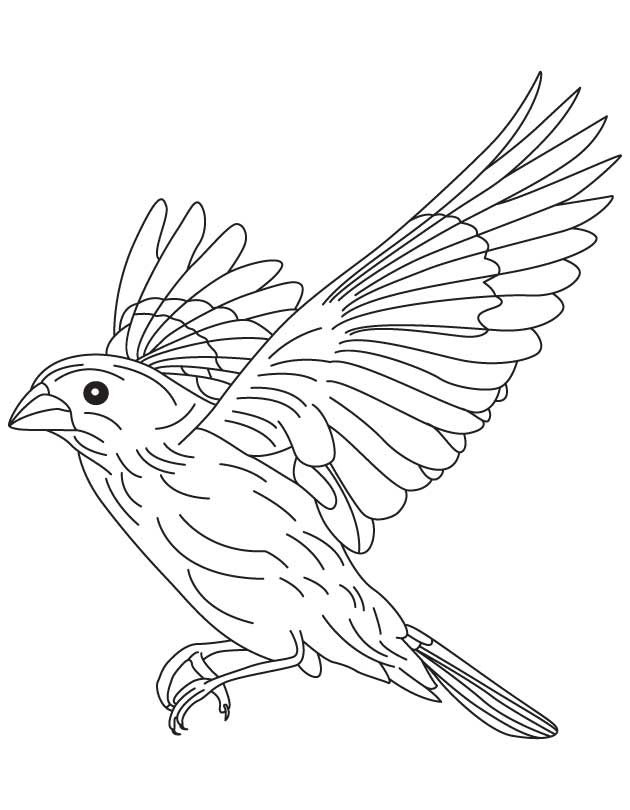 Flying Sparrow Drawing at GetDrawings | Free download