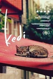 Kedi Stream