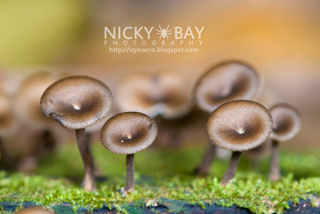 Mushrooms - DSC_6255