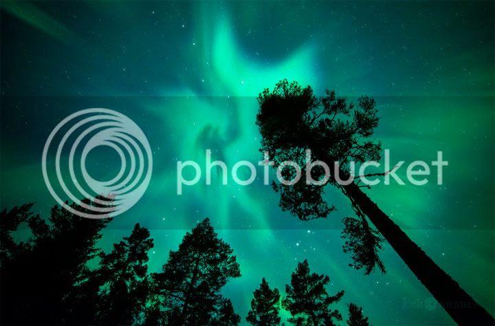 photo Joni-Niemelauml-4_zpszscrpswe.jpg