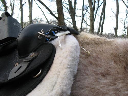 Saddle on