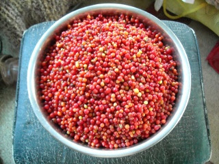 Harvested Agarita Berries