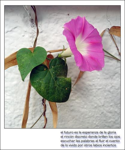 flor en la pared encalada