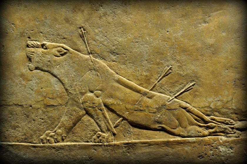 Alabaster bas-relief depicting a dying lioness. The lioness has received 3 arrowsl blood can be seen gushing from the ensuing wounds. One of the arrows hit her at the lower back; this may explain her hind legs' weakness! She is roaring in agony, fighting her death. From Room C of the North Palace, Nineveh (modern-day Kouyunjik, Mosul Governorate), Mesopotamia, Iraq. Circa 645-535 BCE. The British Museum, London. Photo©Osama S.M. Amin.