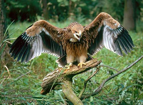 Havada Yaşayan Nesli Tükenmekte Olan Canlılar Hayvanlar Ve Kuşlar
