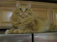 Supervising from the fridge