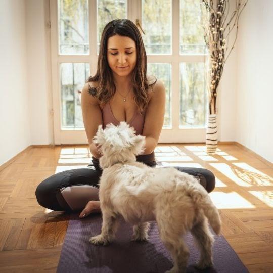 Causas de estrés en perros