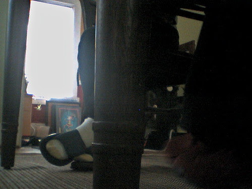 pet cam 27 dec 2010
