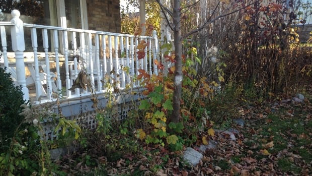 Leave those leaves where they are, says beekeeper Erica Shelley. Solitary bees embed their larvae in the ground and raking leaves can harm their chance of surviving over winter.