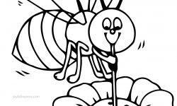 Arı Bal Alıyor Boyama Sayfası