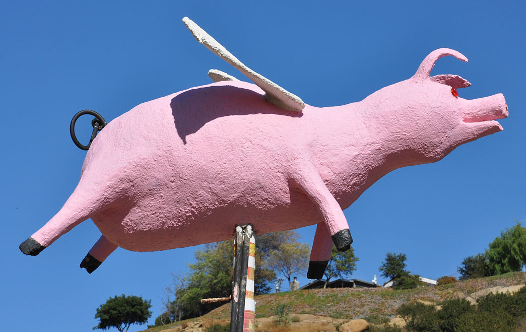 Image result for images of flying pigs