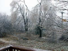 IceStorm_121208_weepingwillowsF