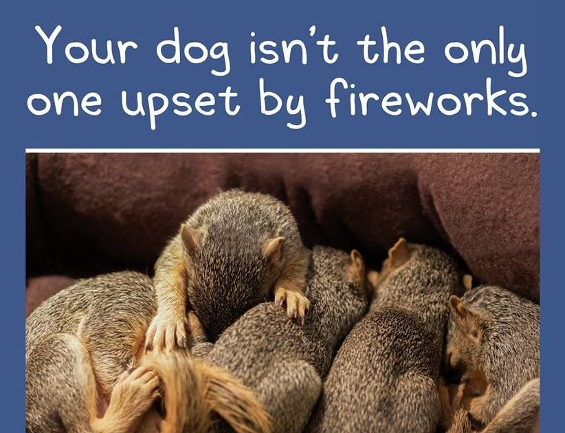 Ptsd Dog Meme Fireworks