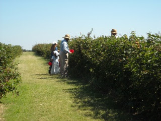 Community Folks Picking Blackberries