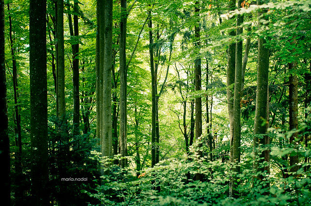 selva negra bosque PEQ-1