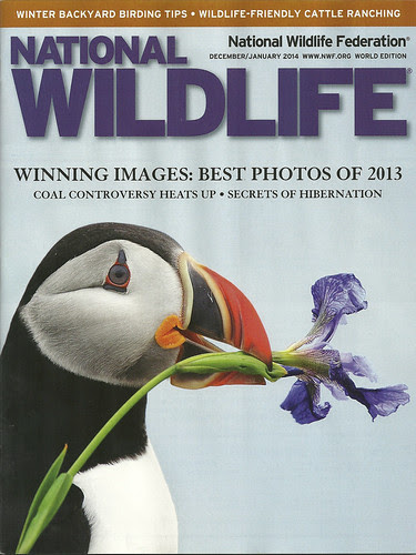 NWF Magazine Dec/Jan 2014 Cover by Megan Lorenz