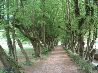 Tree_lane