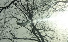 Basking vulture