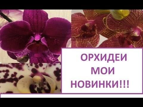 НОВЫЕ ОХИДЕИ КАШПО ДЛЯ ОХИДЕЙ/NEW ORCHIDS POTS FOR ORCHIDS