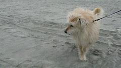 Annie on the beach